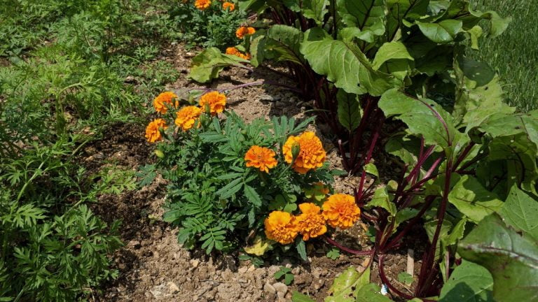 Help Your Garden Thrive By Pairing These Plants
