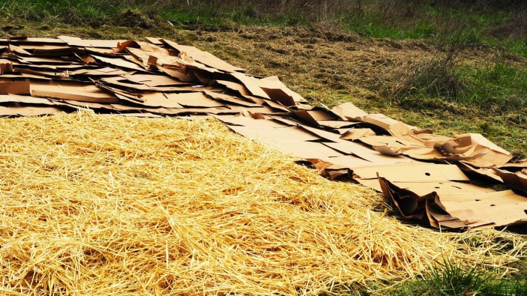 How to Sheet Mulch Your Lawn Without Digging Up Your Grass