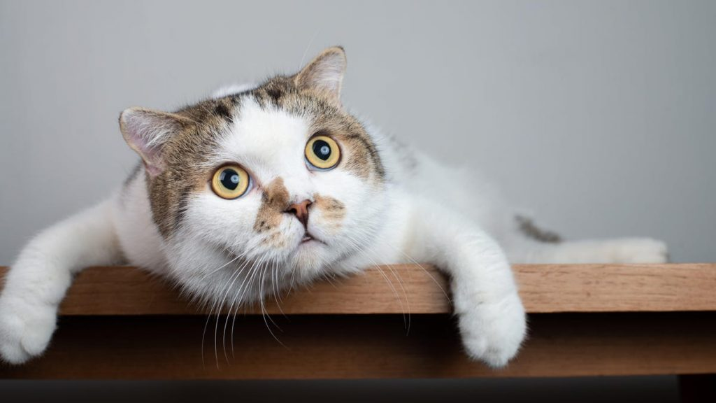 6 of the Most Bizarre Cat Behaviors (and Why They Do Them)