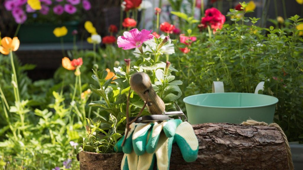 Complete These Gardening Tasks in August Before the End of the Season