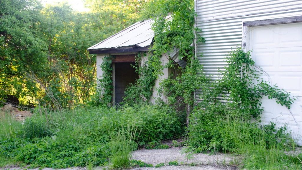 How to Manage English Ivy and Other Invasive Plants Killing Your Yard