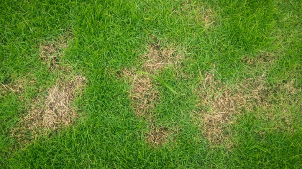 How to Patch the Dead Spots on Your Lawn