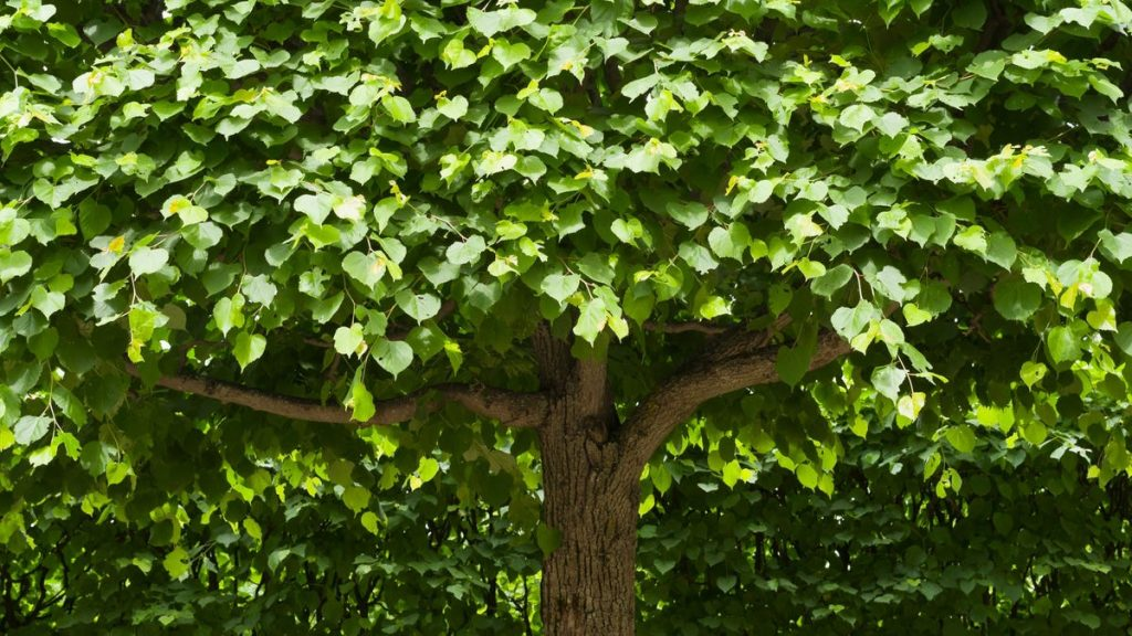 Plant These Trees for an Aromatic Garden